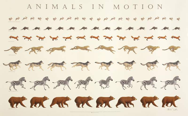 114. On the Gait of Animals (De Incessu Animalium), and, On the Motion of Animals (De Motu Animalium) by Aristotle (c.350 BC)